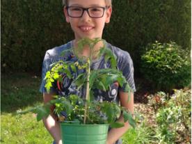 Klasse 5 züchtet Tomaten